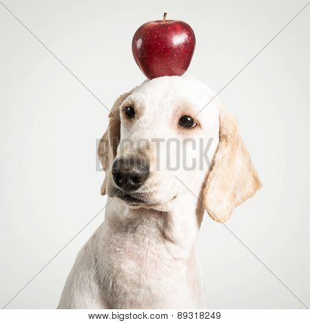 Apple On Dog Head