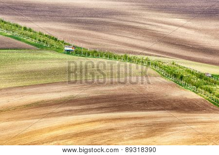 Lines and waves with with grass border, South Moravia, Czech Republic
