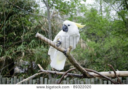 parrot on the tree