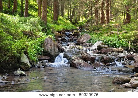 Mountain River And Coniferous Forest