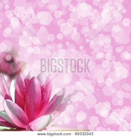 Water Lily On Pink Background