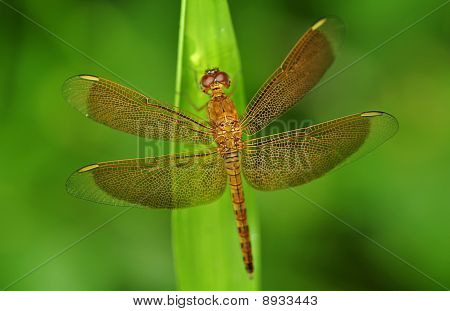 A yellow dragonfly