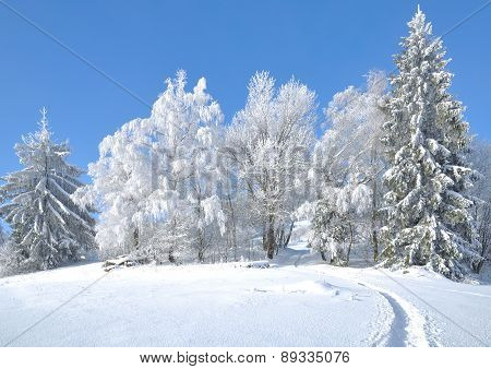Wintertime in Bavarian Forest,Germany
