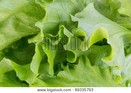 Leaves Of Lettuce