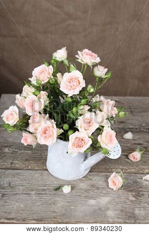 Pink Roses  In Watering Can
