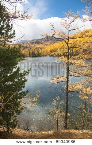 Autumn, Spruce Over The Lake