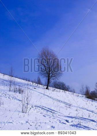 The tree grows on a hillside in winter