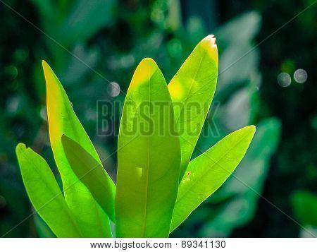 normal green