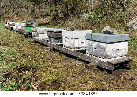 Norwegian Bee Apiary