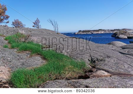 Clumps Of Grass Growing On The Rocks On The Coast