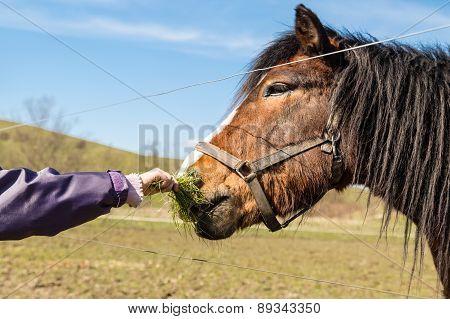 Child Hand Feeding Horse