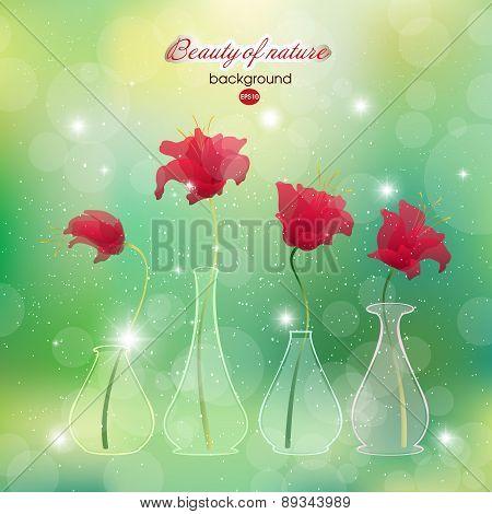 Blooming scarlet flower buds in vases. Flowering plants  vases