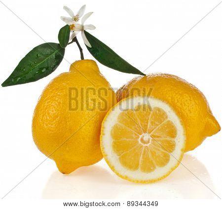 Beautiful citrus lemon with slice close up isolated on white background