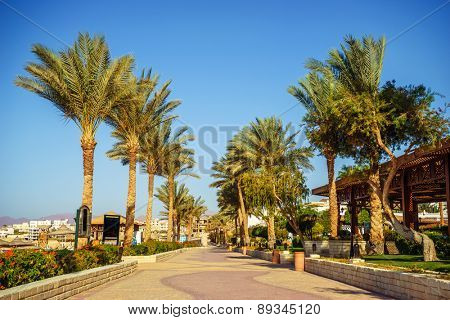 Palm trees and footway in tropical garden on Red sea coast, Sharm el Sheikh, Egypt