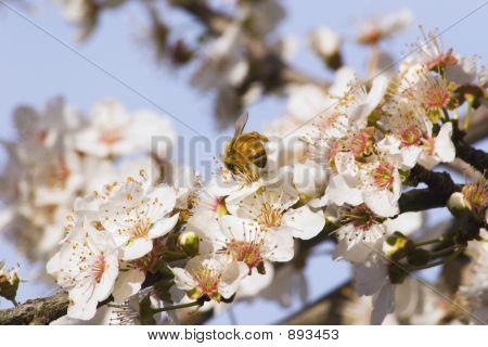 Spring Blossom 02