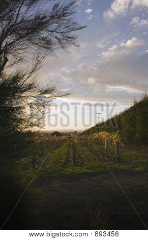 Sun Soaked Vines 03
