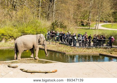 Elephants In Copenhagen Zoological Garden