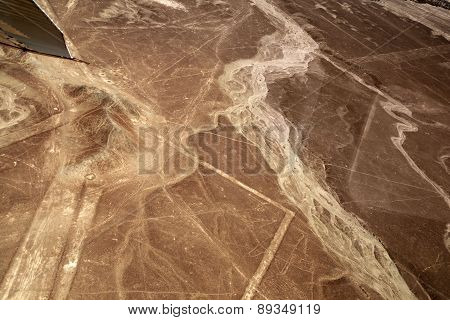 Lines in  Nazca, Peru - Whale