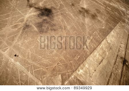 Nazca Lines, Peru - Sea bird
