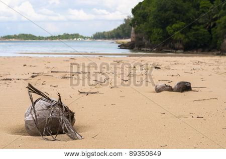 Desiccated Coconut On Beach
