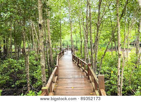 Wood Corridor At Mangrove Forest