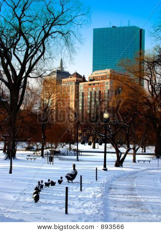 Boston Public Garden Winter