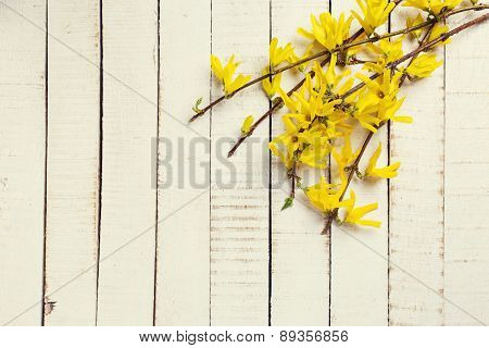 Background With Fresh  Yellow Flowers