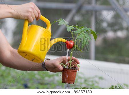 Watering Seedling
