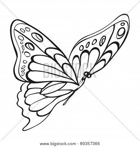 Beautiful Monochrome Butterfly