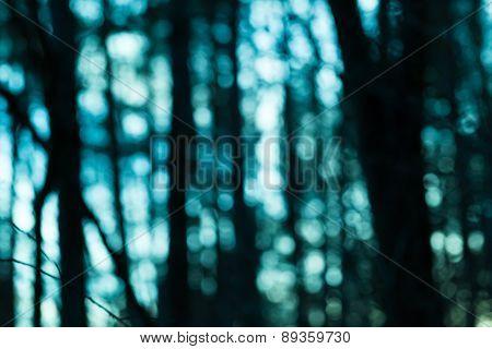 Natural Forest Blurred Background