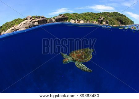 Over under split half and half of Green Sea Turtle and Similan Islands, Thailand