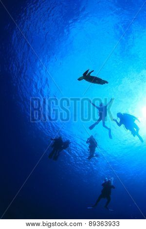 Silhouette scuba divers and sea turtle underwater with sun