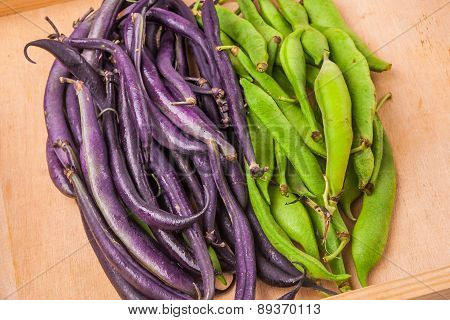 Young Green And Purple Bean Pods