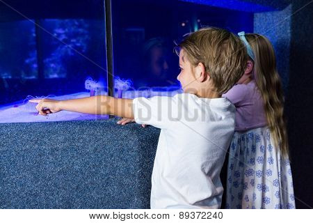 Young man pointing a sea anemone in tank at the aquarium