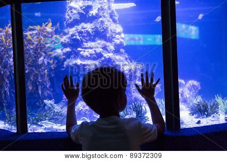Young man touching a fish-tank behind the camera at the aquarium