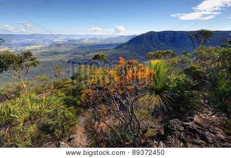Narrowneck To Nellies Glen And Megalong Valley