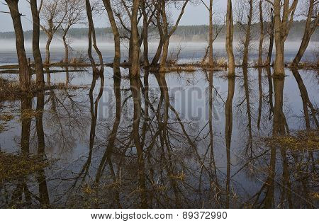 Spring, reflection of trees.