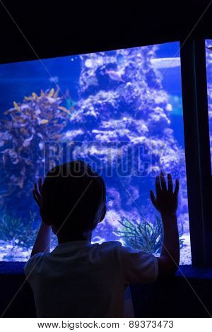 Young man looking at fish behind the camera at the aquarium