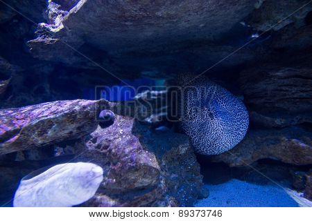 Sea life in a tank at the aquarium