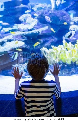 Young man touching a fish-tank behind camera at the aquarium