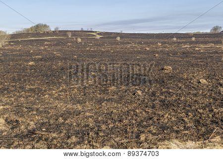 Bruned Grassland