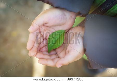 Small green leaf in child hand on palm. Conceptual design nature.