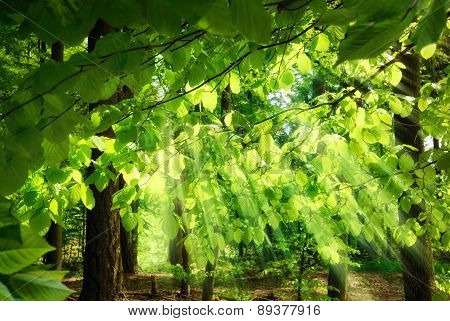 Rays Of Sunlight Falling Through Leaves