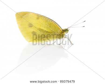 Small white, Pieris rapae in front of a white background