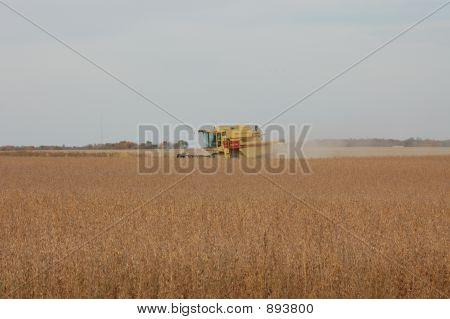 Harvest Time 021