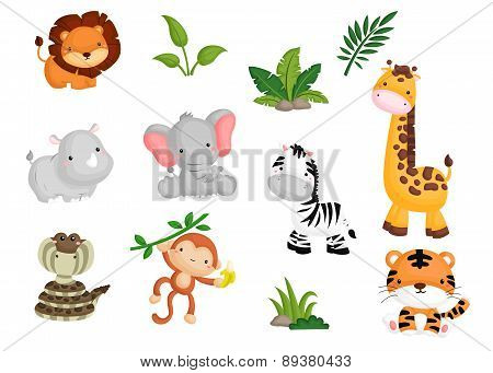 Jungle Animal