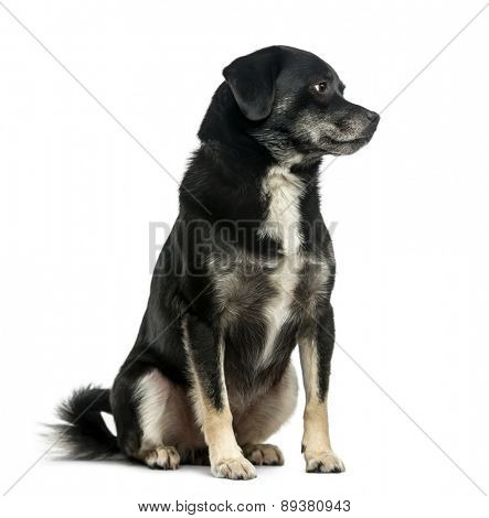 Mixed-breed (5 years old) in front of a white background