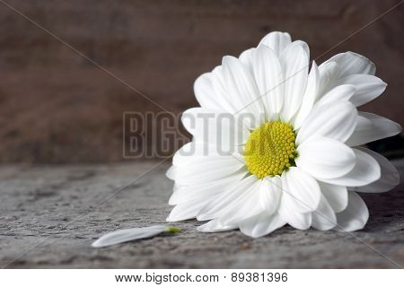 Daisy With Petal On Wood