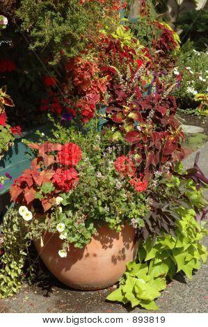 Beautiful Planted Pot