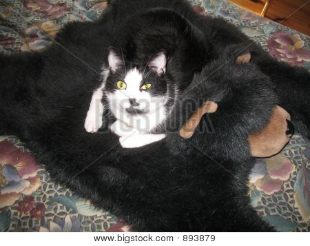 Cat On A Bear Rug